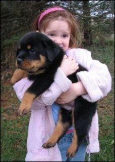 Rottweiler Puppies male and females