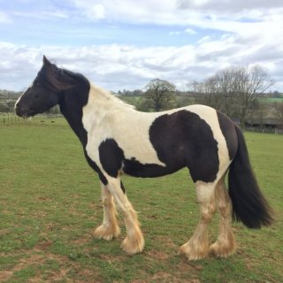 Very Cute Horses For Sale