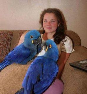 Talking Hyacinth Macaw Parrots available