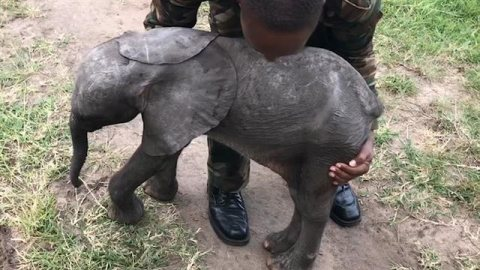 Beautiful baby Elephants for sale