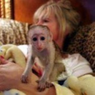 Excellent And Very Intelligent White Face  Monkey