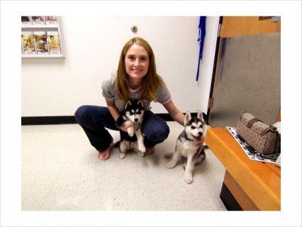 Adorable siberian husky puppies for good homes