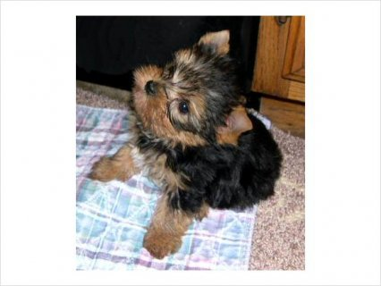 Cute pets for adoption