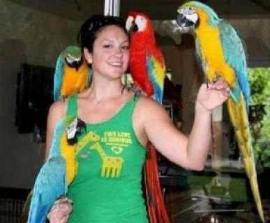 Hyacinth Macaw Parrots For Rehoming