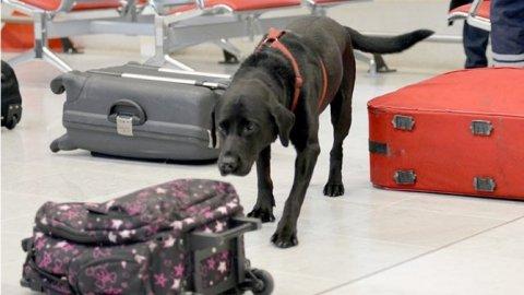 تدريب كلاب القنابل