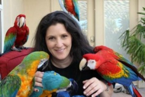 Macaws, African Grey, Amazon, Cockatoo and other Exotic bird