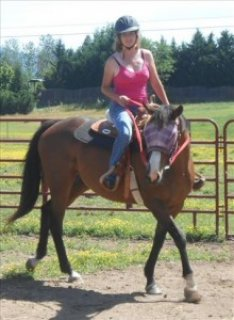 Perfect Mare for Sale