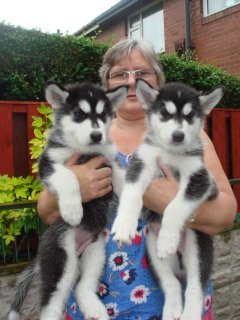 Stunning Male & Female Siberian Husky Puppies