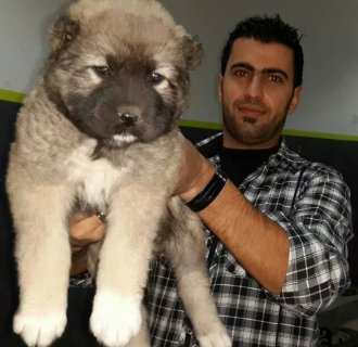 pure caucasian dog