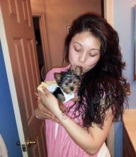 Wowow wow Yokie Puppy for Free Adoption