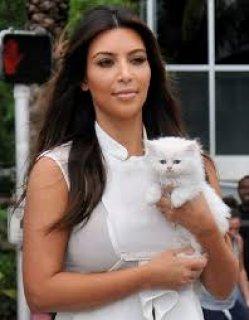 Registered Persian  Kittens Available