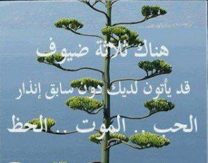 انا احب الصدق والرمانسيه انسانة طيبة بنت ناس