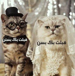 ابحت عن زوج صادق لا يهم عمر