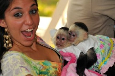 (Male and Female)Capuchin Monkeys for your home
