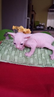 Cute and Lovely Home Kittens For Sale.