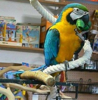 Tamed and Talking Macaw Parrots for sale.,.,.,