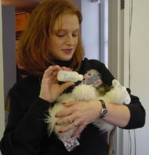 Marvelous Capuchin Monkeys for Sale.,.,.