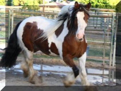 Strong and Bold Winter Horses for Sale,,,.......................