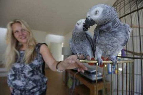 Cute African Grey Parrots for sale/./...//.