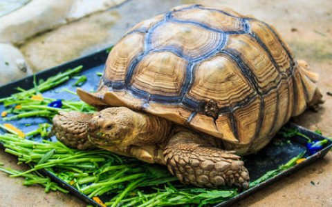 صور Playful tortoises For Sale 1