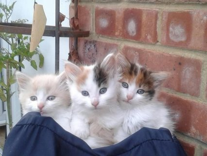 3 stunning male and female kittens