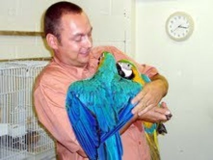 WE HAVE MALE AND FEMALE MACAW PARROTS FOR SALE,