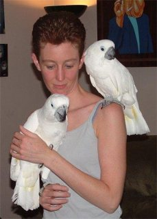 Umbrella Cockatoo Parrots for rehoming