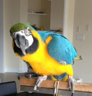 health macaw parrots and other birds including fertile parrot eg