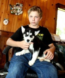 male and female Siberian Husky Puppies available.