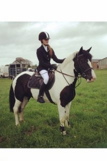 All Rounder Horse for sale