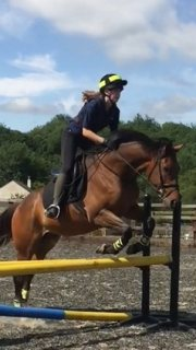 Healthy All Rounder Horse for sale