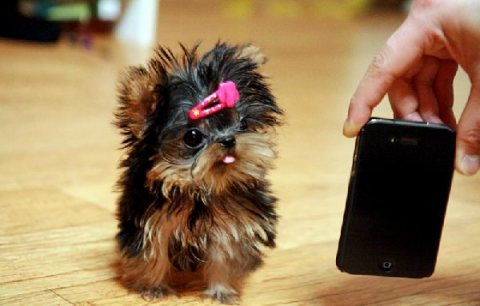 Adorable yorkie puppies for sale...