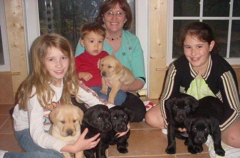 Male and Female Labrador puppies For Rehoming001