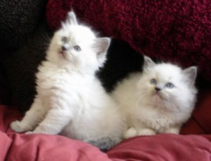 Cute Kittens for Re homing,
