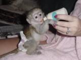 Gorgeous Monkey Ready for Adoption