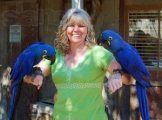 Adorable Talking Hyacinth Macaws