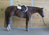 AMAZING AND ENERGETIC FRIESIANT HORSE FOR SALE.
