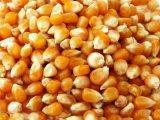 Grade A Yellow Corn / White Maize (Non GMO Yellow Corn)...+254770172338