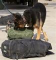 كلاب البحث عن القنابل