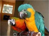 We have lovely parrots for good homes