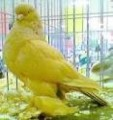 Gorgeous Tamed & Talking Parrots for Sale