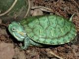 Outstanding tortoises For Sale.