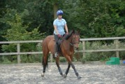 Very pretty alround horse open to be offers